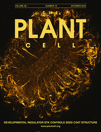Cover Ezquer et al., The Plant Cell, Vol. 28, Issue 10, Oct 2016